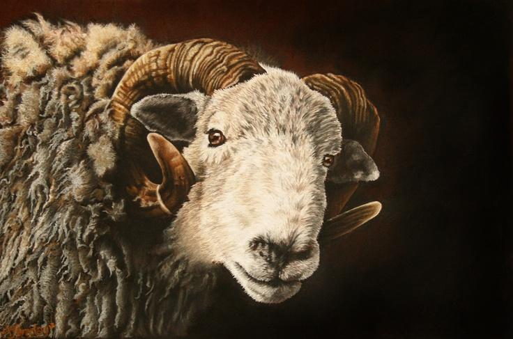 Herdwick ram original and prints for sale