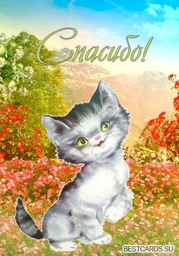 Сднем, открытки с кошкой и надписью