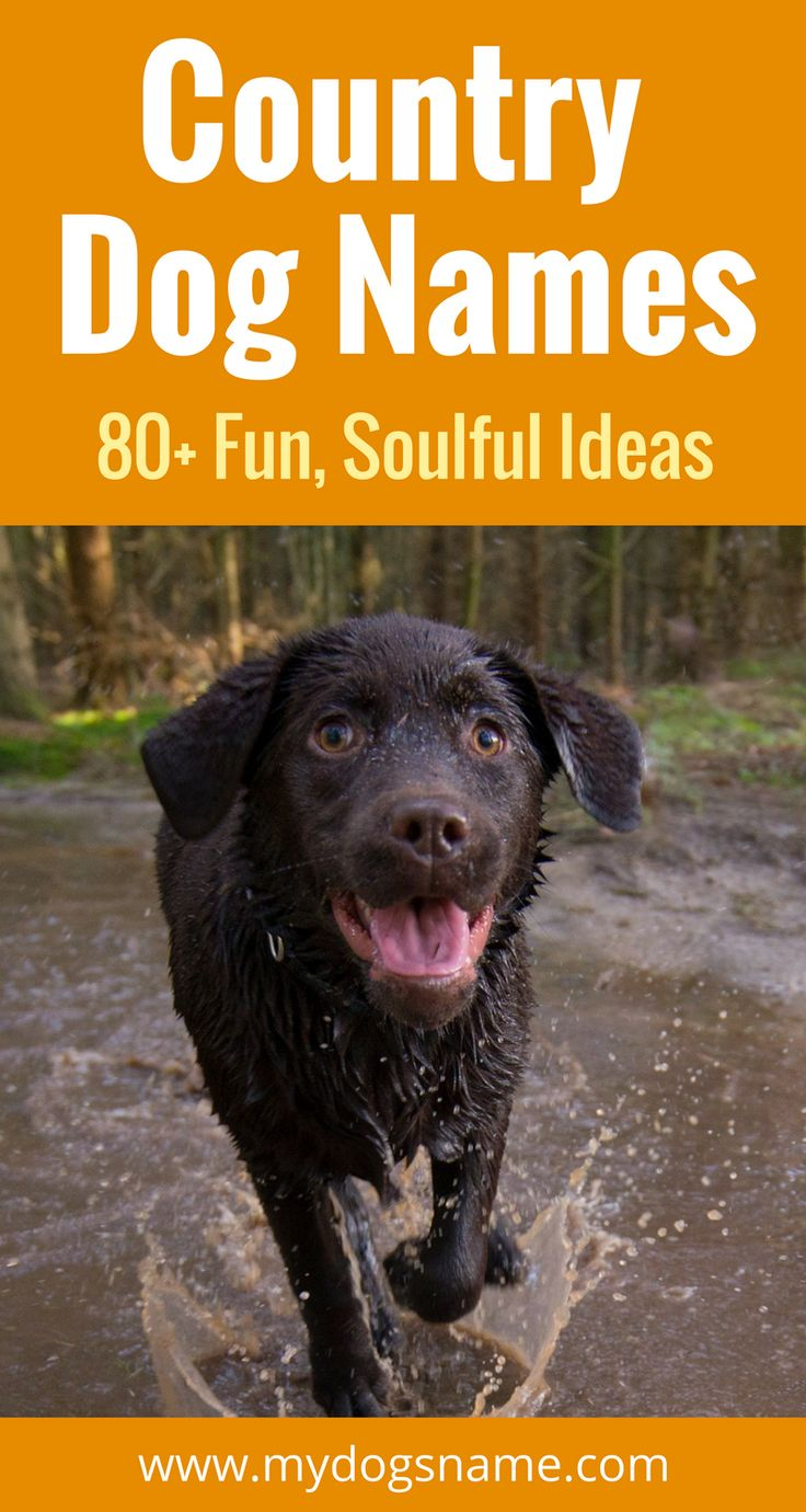 Yeehaw! Get ready for 87 country-inspired dog names that are full of soul and a whole lot of fun. If you like country music, this list is a must read.