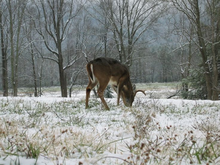 Whitetail Deer Hunting Tips and Tricks – Pre-Rut Hunting