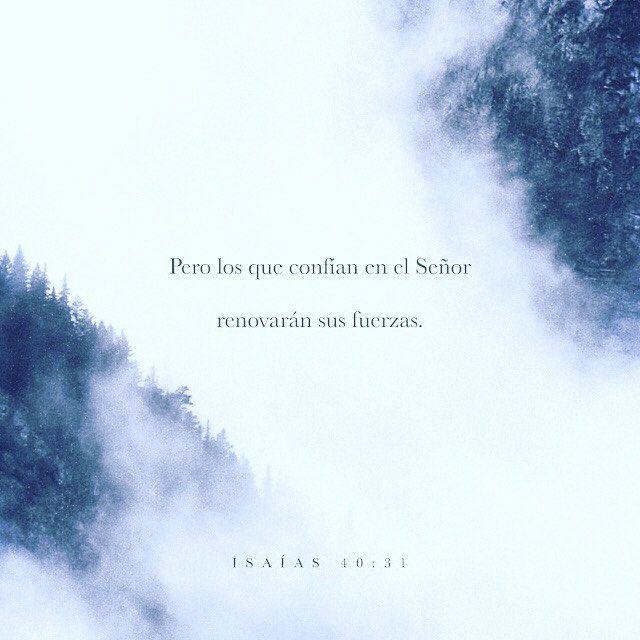 pero los que confían en Dios siempre tendrán nuevas fuerzas. Podrán volar como las águilas podrán caminar sin cansarse y correr sin fatigarse. Isaías 40:31