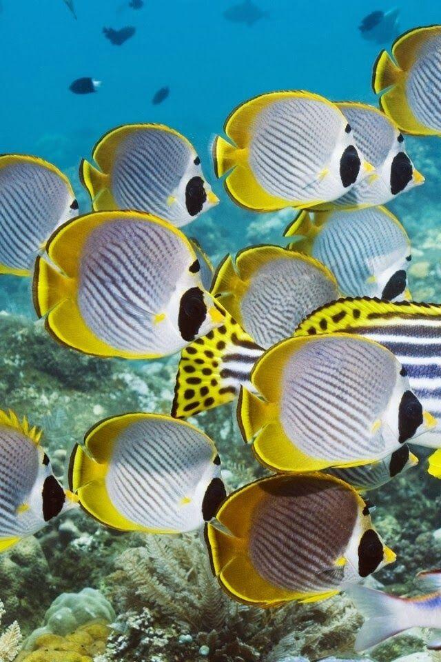 Tropical Dreams: Philippines - Underwater Wonder World