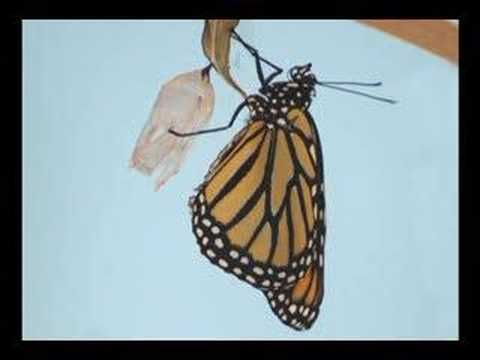 Time lapse of a butterfly life cycle