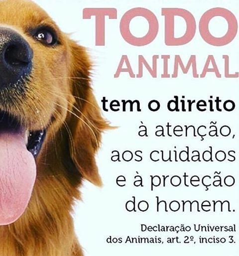 CONCORDO PLENAMENTE! ❤️❤️❤️ #cachorro  #amoanimais  #amogato  #gato  #amocachorro  #direitoanimal  #euprotejo