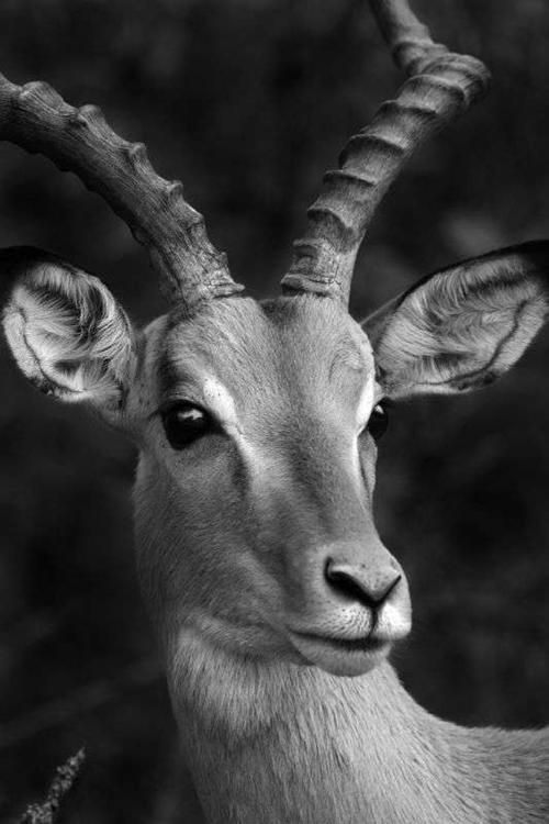 Stunning Examples of Animal Photography in Black and White