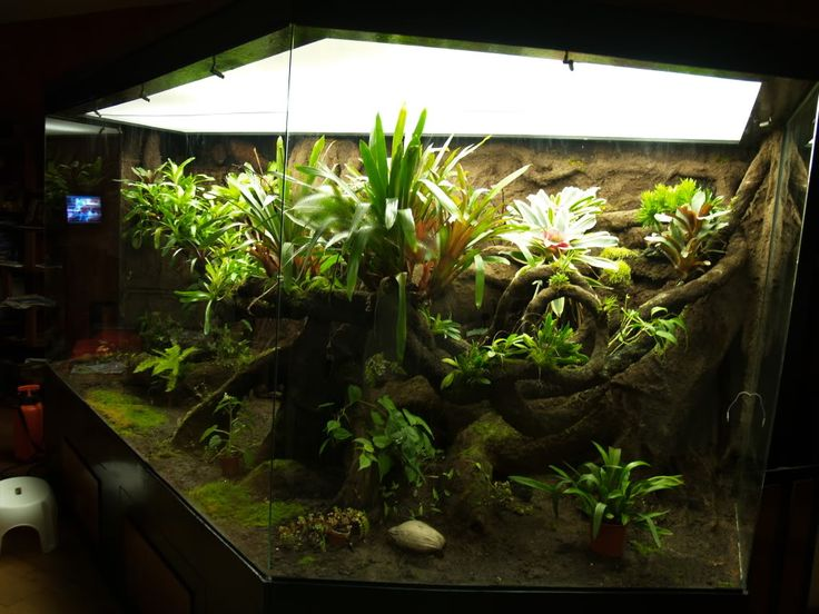 Large Vivarium Construction - Page 7 - Dendroboard - 121 Best Terrariums & Paludariums Images On Pinterest Vivarium