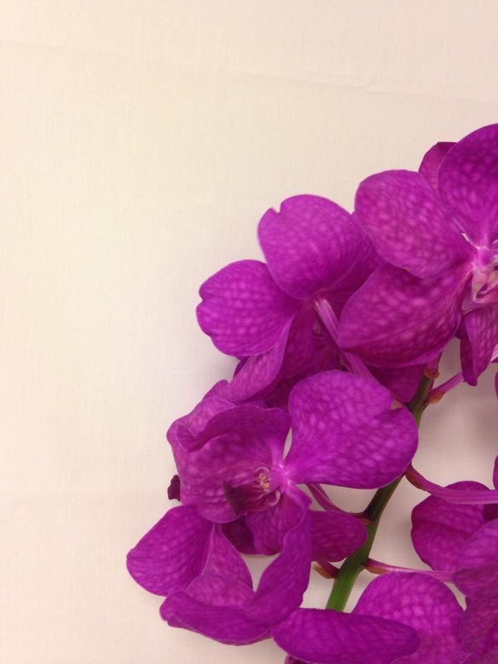 Norsk navn: Orkide - Vanda Botanisk navn: Vanda