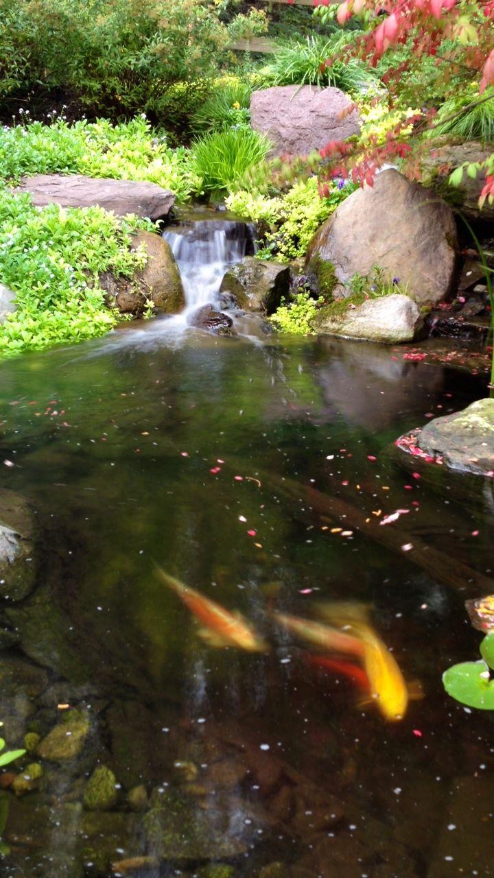 34 best backyard ponds fish ponds koi ponds ecosystem ponds