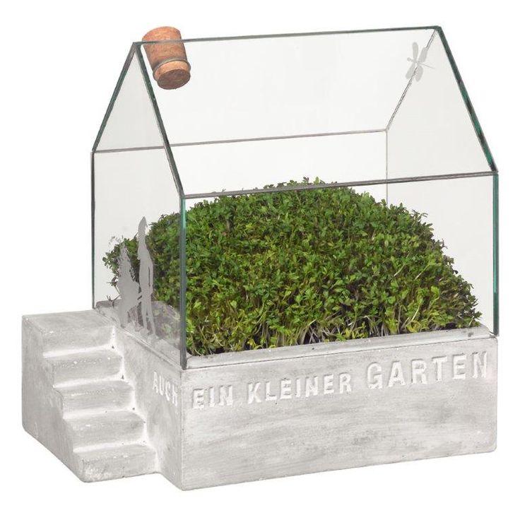 kr uter ziehen im miniatur gew chshaus aus beton und glas. Black Bedroom Furniture Sets. Home Design Ideas
