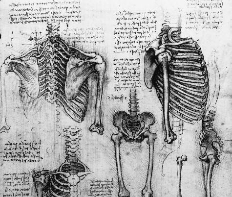 77 best images about bones on pinterest, Skeleton