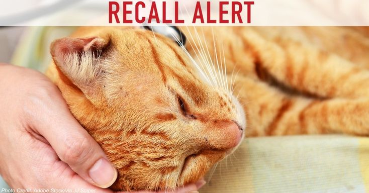 Hill's Pet Nutrition of Kansas and the Food Standards Agency (FSA) has announced a recall of certain packs of its cat food pouches, all of which have shown very high levels of iron. Iron, while essential to the diets of felines, can be damaging to the digestive system if too much is consumed, resulting in diarrhea and vomiting.