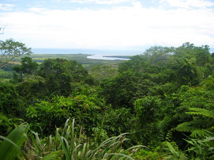 The Daintree Rainforest - will be checking this off the list in 3 months!