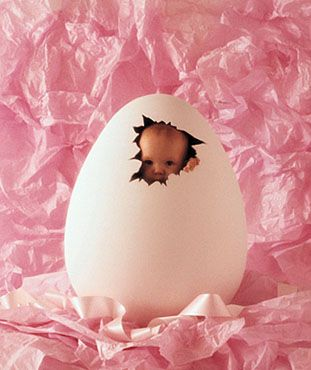 Anne Geddes Photographer makes the baby look like he or she is cracking out of an egg
