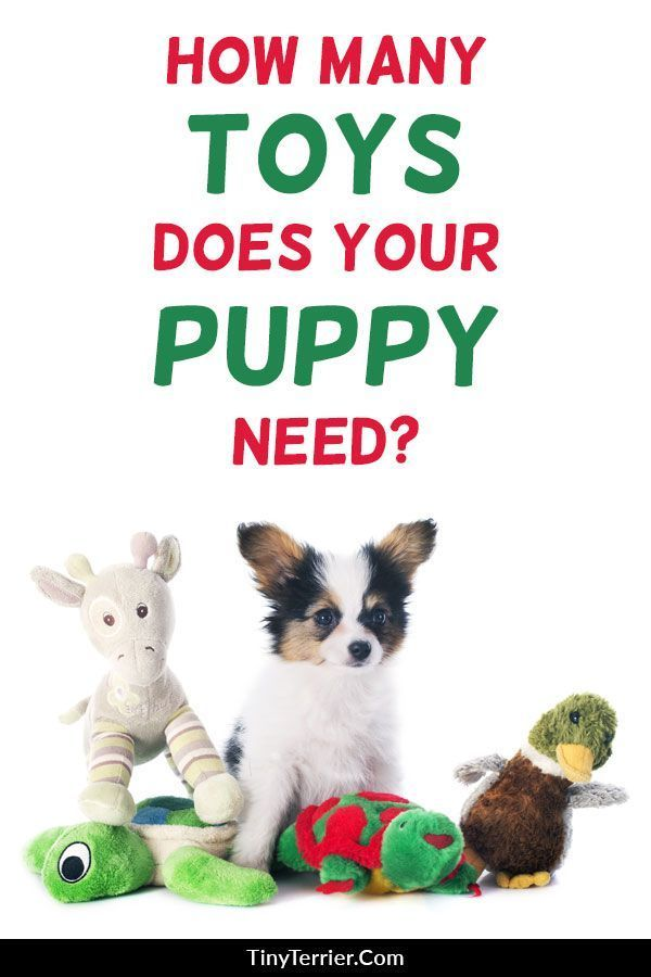 10 Best Puppy Toys For 2019 Fun Toys To Beat Puppy Boredom Toy