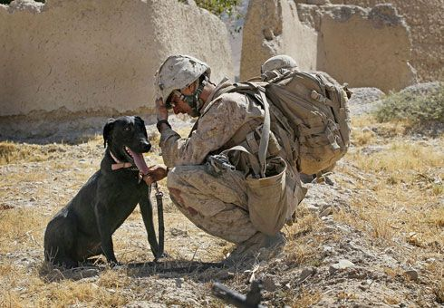 war dogs | Memorial Day Tribute to War Dogs : Dog Obedience Training Blog
