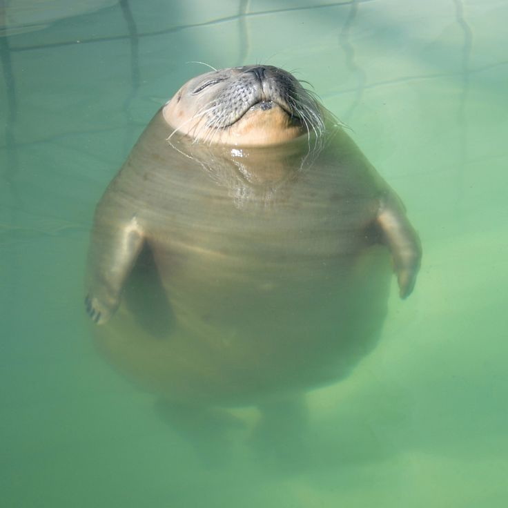 Relaxed seal in the swimming pool so cute for Cute pool pictures