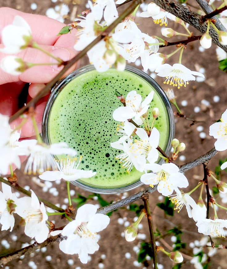 With Spring just around the corner, a cup of #matcha a day will help you get get that Summer-ready body that's always so hard to find after Winter! 💚🍵🏖  www.justmatcha.co.za  #justmatcha #matchagreentea #matchalove #matchaholic #matchaaddict #springhassprung #matchasouthafrica #southafrica