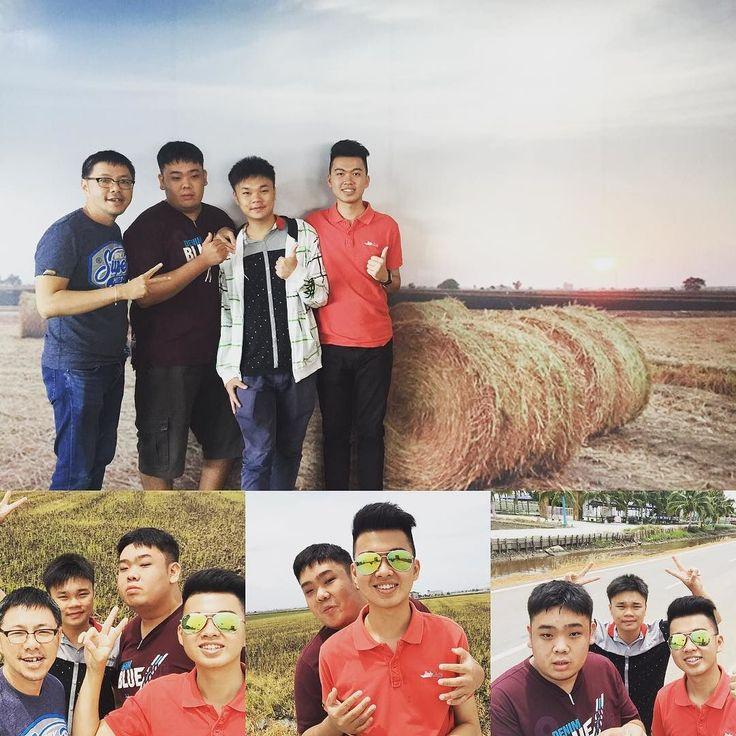 #sekinchan #大叔与三剑客 #kilangberasrakyatsekinchan
