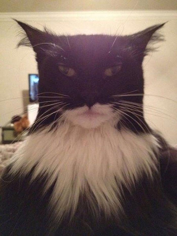 25 Gatos engraçados que adoram fazer selfie