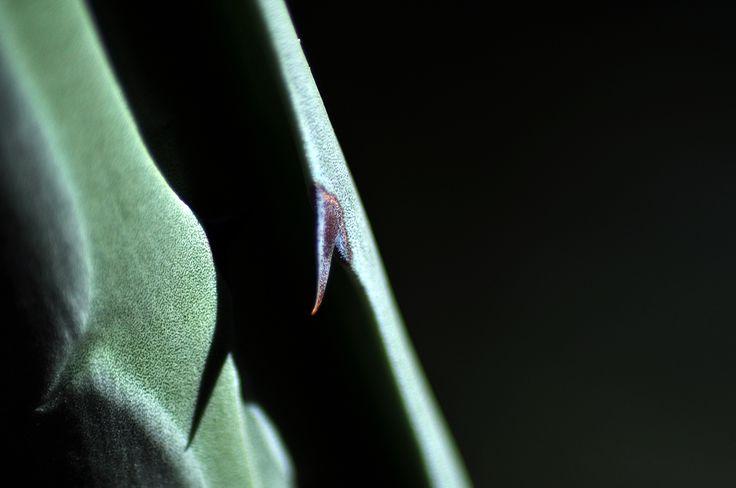 Balck and Green #nature #macro #closeup #photography