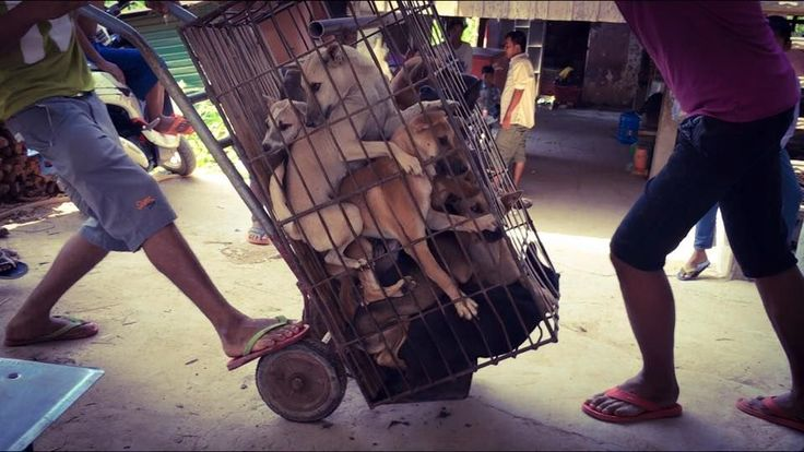 BOYCOTT CHINA Yulin Dog and cat meat festival is a disgusting show of SADISM !! Here;s how you can help shut it down..