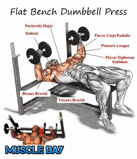 201 Best Bench Press Images On Pinterest: 17 Best Images About Chest And Tri Day On Pinterest