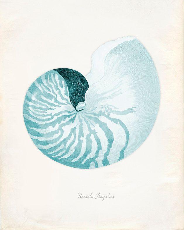 Vintage Sea Shell Nautilus Pompilius Print 8x10 P226 1400 Via Etsy