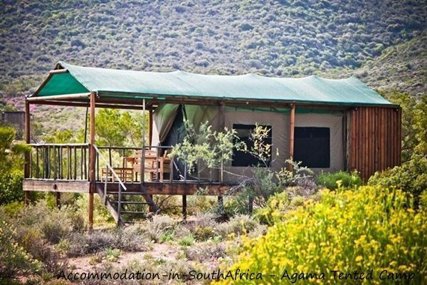Agama Tented Camp accommodation. Peace and quietness at Agama Tented Camp. Namaqualand accommodation. Tented Camping in Namaqualand.