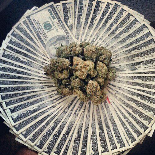 hempcannabis essay When most people think of marijuana, they think of all the possibilities of why they should get high.