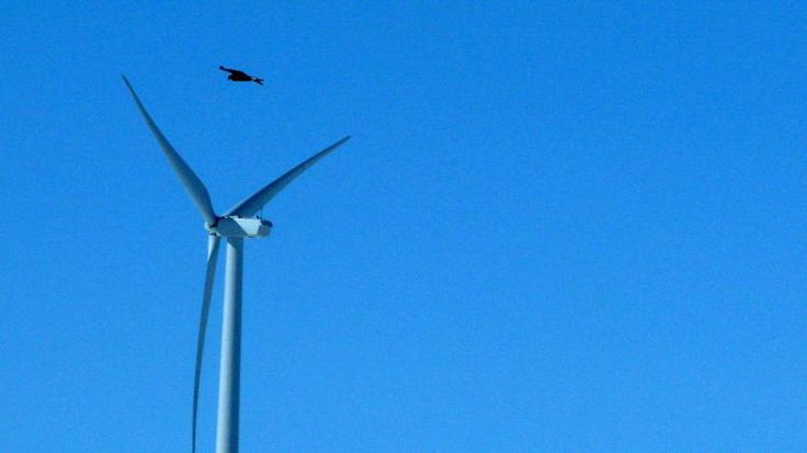 Wind energy company pleads guilty to eagle deaths - Yahoo News