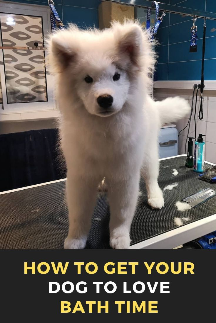 How To Get Your Dog To Love Bath Time Your Dog Puppy Care List Dogs