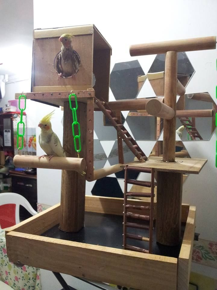 78 Best Images About Creative Ideas Of Wooden Parrot