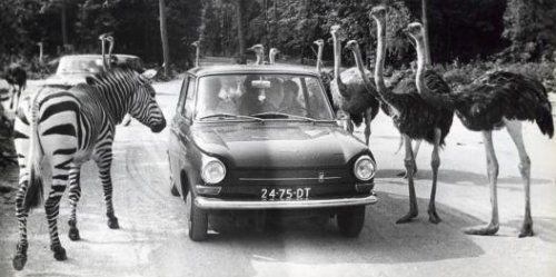 Burgers Zoo (safari park 1968)