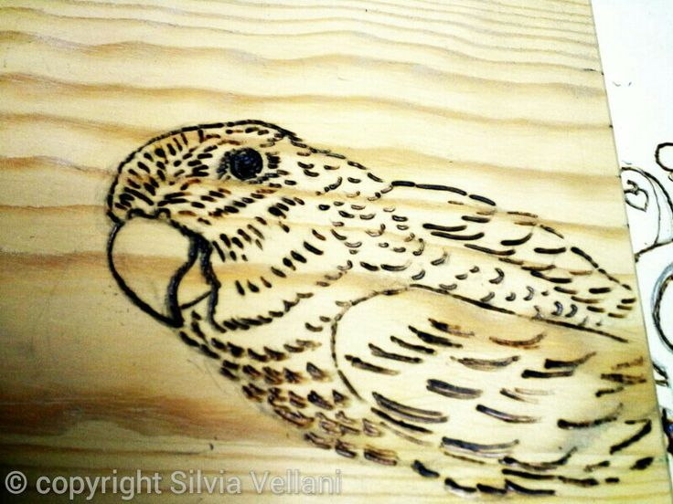 Little parrot,  agapornis on wood