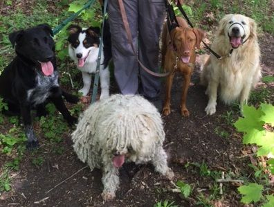 May 16th Expedition Walk Pack #1 - Bear, Zephyr, Nuba, George and Dexter!