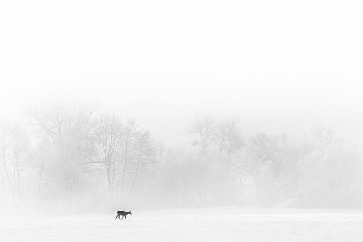A winter morning in Harghita. #harghita, #romania, 2016. Click for an original, limited edition, signed, fine art print on Hahnemühle high quality paper. #fineart #print #deco #photography #monochrome #winter #landscape #deer #highkey #pierrepichot