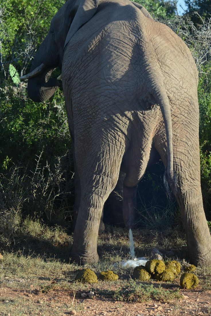 2014-01-12: Addo Elephant Park, South Africa. An elephant up close and personal, quite a story to this image.