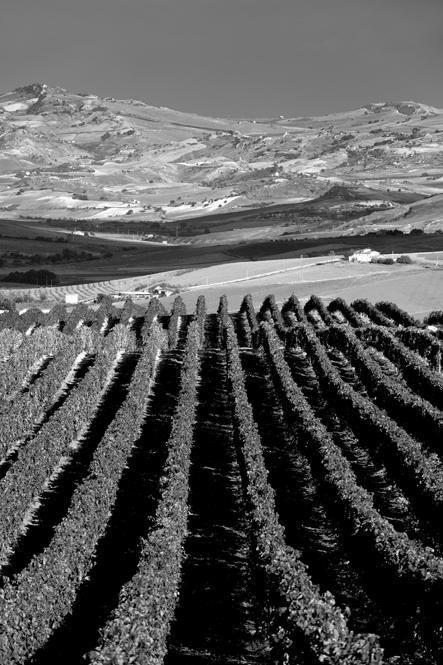 S. Michele Ganzaria. Agriturismo Il Gigliotto, a vineyard - id: 8815. www.alfiogarozzo.com.