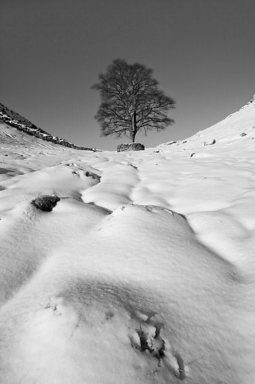 Sycamore Gap, Hadrian's Wall, Northumberland, by chrismci.redbubble.com