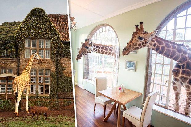 Giraffe Manor, Κένυα GIRAFFE MANOR