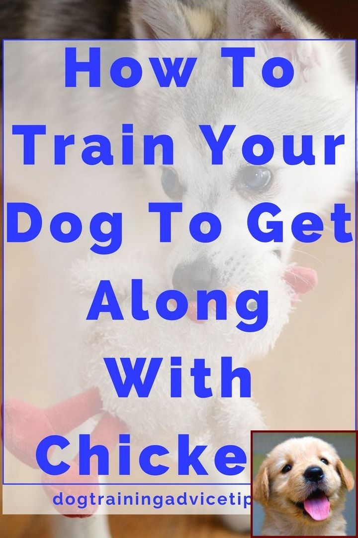 1 Have Dog Behavior Problems Learn About Potty Training A Puppy