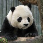 Top article directories after panda