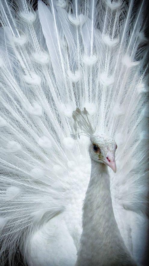 de una hermosa ave