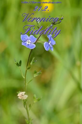 Flower Meanings: Symbolism of Flowers, Herbs, and Trees ...