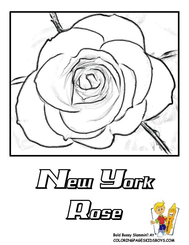 new york state flower coloring page rose - York Coloring Pages Printable