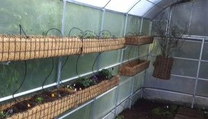 Troughs for Vertical Gardening in the greenhouse. http://urbanfreedom.co.za