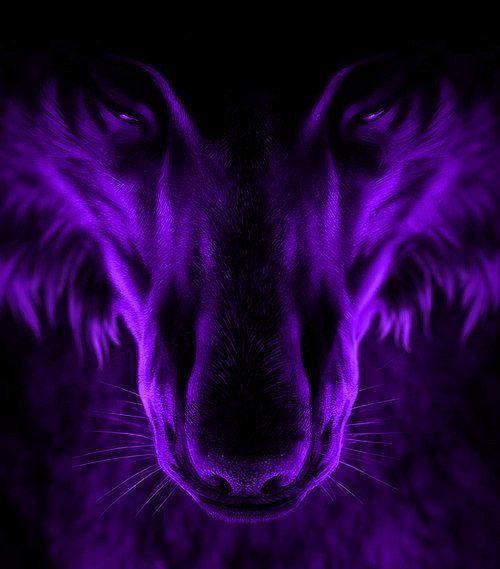 PURPLE WOLF grrrrrrrrrrrrrr