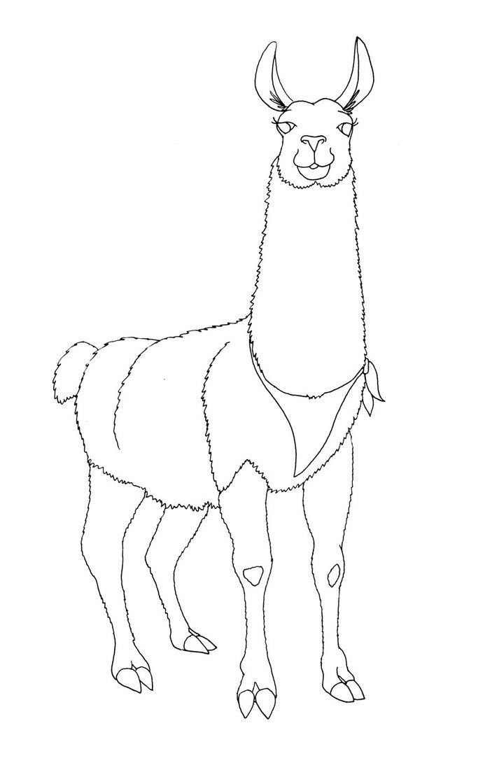 Line Drawing Llama : Images for gt llama face drawing pinterest