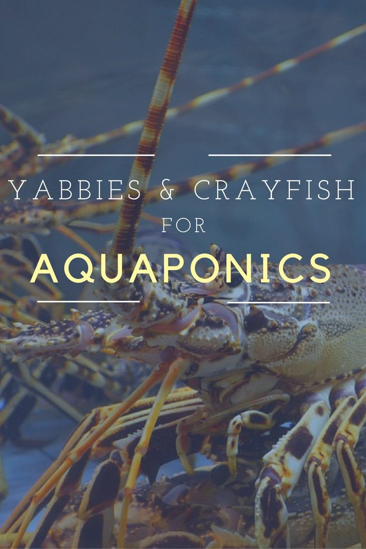 477 best fish farming images on pinterest aquaponics system