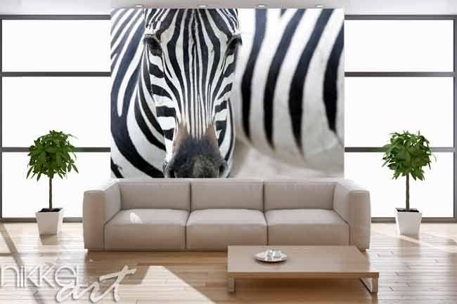 Fotobehang op maat Zebra